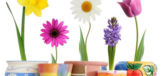5_Blumen_in_Töpfen_20_cm
