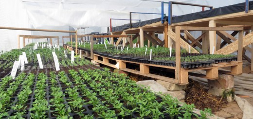 Landwirtschaft16