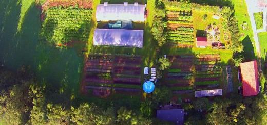 landwirtschaft 31