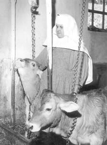 rohrbachkuhstalll1962