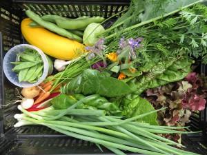 Gemüse Infoabend Solidarische Landwirtschaft LeGuLa online @ online